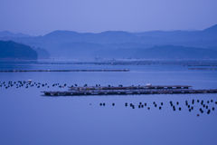Peaceful morning blue sea mountain gulf. Peaceful morning before sunrise with blue  sky and mountain, Shima, Mie, Japan. The largest pearl cultivation base of Royalty Free Stock Photography