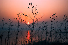 Peaceful morning red sunrise tranquil scene Royalty Free Stock Photography