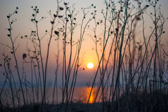 Peaceful morning red sunrise tranquil scene. Beside river and withered grass Royalty Free Stock Photo