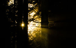 Peaceful morning sun. Kielder forest morning sun through the forest stock photography