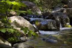 Peaceful mountain stream. Peace and tranquility of a mountain stream Royalty Free Stock Photos