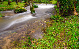 Peaceful mountain stream flows through lush forest , Doi Inthano Stock Image