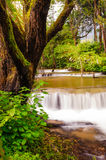Peaceful mountain stream flows through lush forest , Doi Inthano Royalty Free Stock Photography