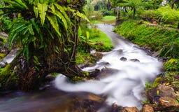 Peaceful mountain stream flows through lush forest , Doi Inthano Royalty Free Stock Photos