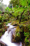 Peaceful mountain stream flows through lush forest , Doi Inthano Stock Images