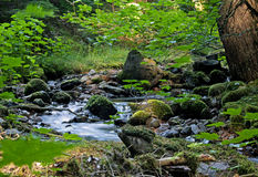 Peaceful Mountain Stream With Lush Greenery. A peaceful stream works it's way through lush greenery in the mountains Royalty Free Stock Photography