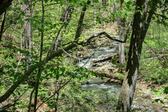 Peaceful Mountain Stream. A scenic view of a peaceful woodland stream with footbridge in the background located in the Blue Ridge Mountains of Virginia, USA Royalty Free Stock Photos