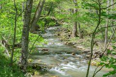 Peaceful Mountain Stream. A scenic view of a peaceful woodland stream with footbridge in the background located in the Blue Ridge Mountains of Virginia, USA Royalty Free Stock Photo