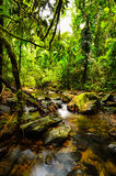 Peaceful mountain stream Stock Images