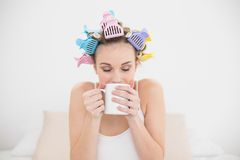 Peaceful natural brown haired woman in hair curlers enjoying coffee smell Stock Photos