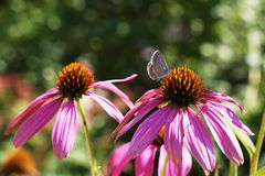 A beautiful tiny butterfly sitting on a pink flower on the blurred background. A peaceful natural pattern of a tiny colorful butterfly sitting on a purple flower stock image