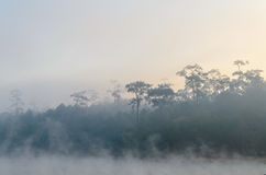 Peaceful natural pine tree in morning with fog at Galyani Vadhana District Stock Photo