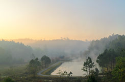 Peaceful natural pond in morning at Galyani Vadhana District Royalty Free Stock Photo