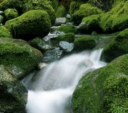Free Peaceful Nature Stream, New Zealand. Royalty Free Stock Photography - 101850417