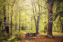 Peaceful nature vintage background. Stock Image