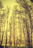 Peaceful nature vintage background. Royalty Free Stock Photos