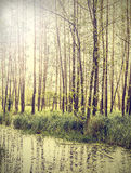 Peaceful nature vintage background. Stock Photo