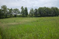 Peaceful Open Field View within the Bruce Trails Splitrock Narrows royalty free stock photography