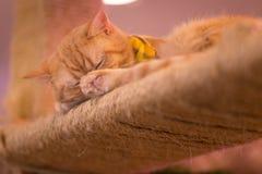 Peaceful orange red tabby cat male kitten Stock Photo