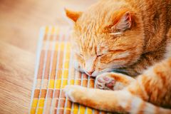 Peaceful Orange Red Tabby Cat Male Kitten Sleeping. Peaceful Orange Red Tabby Cat Male Kitten Curled Up Sleeping In His Bed On Laminate Floor Stock Image