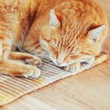 Peaceful Orange Red Tabby Cat Male Kitten Sleeping. Peaceful Orange Red Tabby Cat Male Kitten Curled Up Sleeping In His Bed On Laminate Floor Royalty Free Stock Image