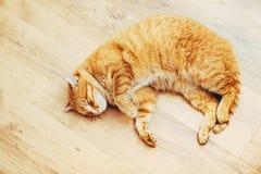 Peaceful Orange Red Tabby Cat Male Kitten Sleeping Stock Photos