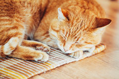 Peaceful Orange Red Tabby Cat Male Kitten Sleeping. Peaceful Orange Red Tabby Cat Male Kitten Curled Up Sleeping In His Bed On Laminate Floor Stock Photography