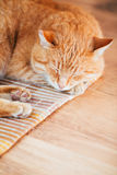 Peaceful Orange Red Tabby Cat Male Kitten Sleeping. Peaceful Orange Red Tabby Cat Male Kitten Curled Up Sleeping In His Bed On Laminate Floor Stock Photos