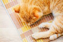 Peaceful Orange Red Tabby Cat Male Kitten Sleeping Stock Image