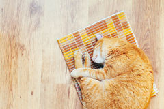 Peaceful Orange Red Tabby Cat Male Kitten Sleeping. Peaceful Orange Red Tabby Cat Male Kitten Curled Up Sleeping In His Bed On Laminate Floor. Top View Stock Images