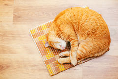 Peaceful Orange Red Tabby Cat Male Kitten Sleeping. Peaceful Orange Red Tabby Cat Male Kitten Curled Up Sleeping In His Bed On Laminate Floor. Top View Royalty Free Stock Image