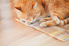 Peaceful Orange Red Tabby Cat Male Kitten Sleeping In His Bed On. Peaceful Orange Red Tabby Cat Male Kitten Curled Up Sleeping In His Bed On Laminate Floor Stock Photography