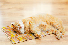Peaceful Orange Red Tabby Cat Male Kitten Sleeping In His Bed On. Peaceful Orange Red Tabby Cat Male Kitten Curled Up Sleeping In His Bed On Laminate Floor Royalty Free Stock Photography