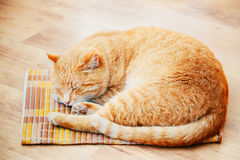 Peaceful Orange Red Tabby Cat Male Kitten Sleeping In His Bed On Laminate Floor. Peaceful Orange Red Tabby Cat Male Kitten Curled Up Sleeping In His Bed On Royalty Free Stock Photos