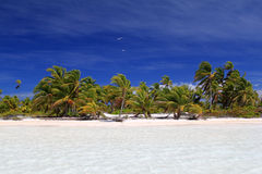 Peaceful Wild Coco Palm Beach. Royalty Free Stock Images