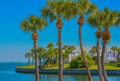 Peaceful palms on Tampa Bay in St Petersburg, Florida. stock photo