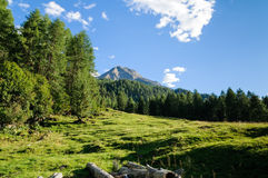 Peaceful panorama. Peaceful woods landscape of north Italy with evergreen trees and blue sky Royalty Free Stock Photos