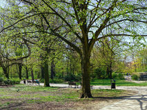 Peaceful park in the city Royalty Free Stock Photos