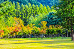 Peaceful Park at Nami Island, South Korea Royalty Free Stock Images