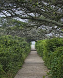 Peaceful Path Royalty Free Stock Photography