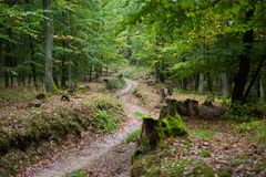 Peaceful path in the autumn forest. Deep forest road lined with beautiful autumn trees Stock Images