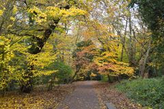 A peaceful path in an autumn park. stock images