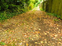 Peaceful path in autumnal forest or park Royalty Free Stock Photo