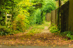 Peaceful path in autumnal forest or park Royalty Free Stock Photos
