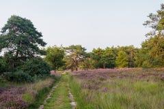 Peaceful path leading through trees and heathland Stock Photos