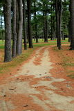 Peaceful path through the woods Royalty Free Stock Images