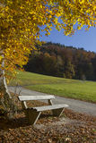 Peaceful place with bench, colorful beech tree in autumn Stock Images
