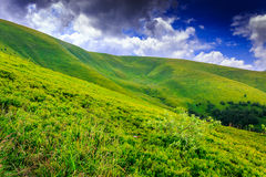 Peaceful place. Bush on the green meadows sloping mountains under the blue sky with stormy clouds Stock Images