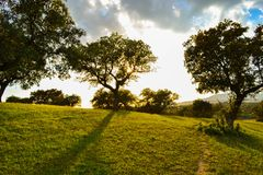 Peaceful place. Evening sunset against trees. In a green grass field stock photo