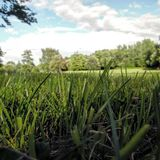 Peaceful place. Photo from the grass looking towards the lake Stock Photo